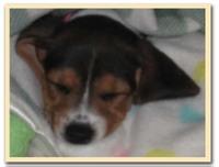 Stella_sleeps
